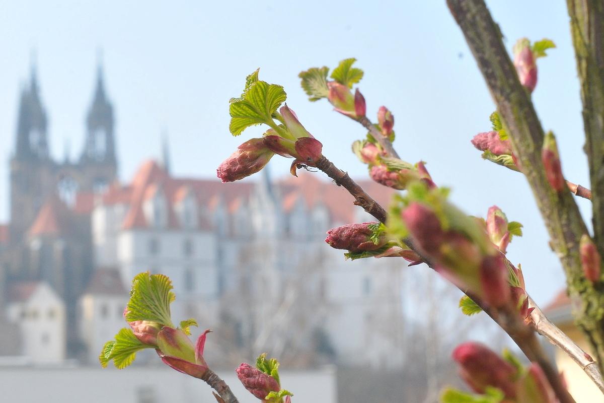 Die Albrechtsburg kann ab diesem Wochenende wieder besucht werden.