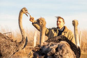Verirrter Emu von der A4 jetzt in Helmsdorf