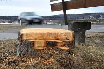 Zwischen Baumschutz und Kahlschlag