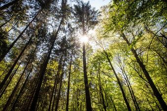 Höchste Waldbrandgefahr in Sachsen