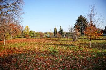 Riesa plant Baumpflanzungen