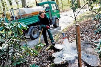 Im Pückler-Park sterben die Baumriesen