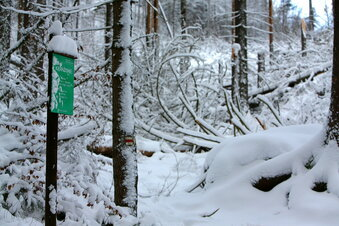 Totholz blockiert Wege im Nationalpark