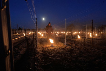 Nochmals Nachtfeuer im Weinberg