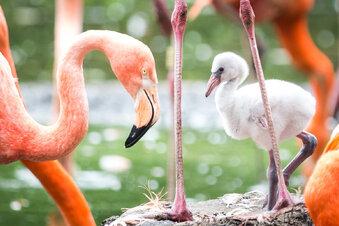 Ein neues Haus für die Zoo-Flamingos