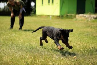 Hunde im Garten: Kündigungsgrund?