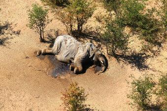 Rätselhaftes Massensterben der Elefanten