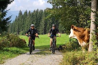 Wo die Kuh beim Radfahren zuschaut