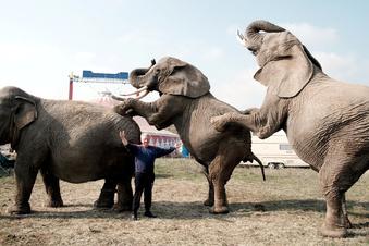 Meißner soll bei Circus Afrika gezündelt haben