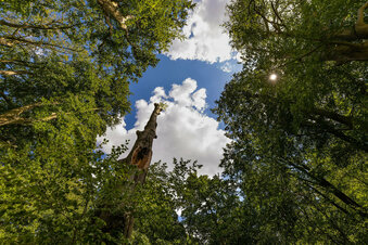 Landesamt fordert Baumkontrolle
