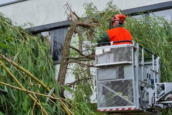 Gewitter wütet und stürzt Bäume um