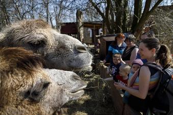 Görlitzer Zoo macht schon eine Viertelmillion miese