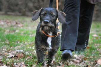 Waldheim erhöht die Hundesteuer