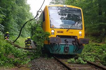 Trilex rammt umgestürzte Bäume