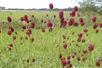 Auf diese Blume fliegen Insekten besonders