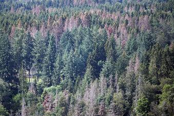 Naturschützer: Wälder brauchen Milliarden