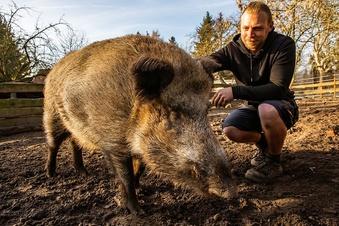 Ein Wildschwein als Haustier