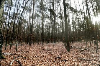 Wälder in dramatischem Zustand