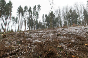 Im Wald wird weiter gearbeitet