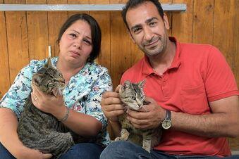 Spenden für Tiere irakischer Familie