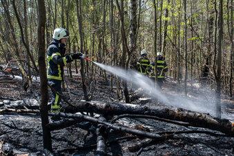 Brand im Langenauer Wald facht wieder auf