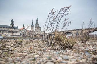 Wie viele Neubauten verträgt Dresdens Klima?