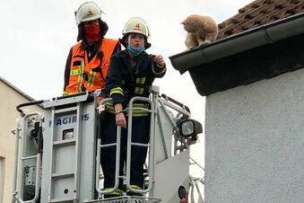 Muss die Feuerwehr Tiere retten?