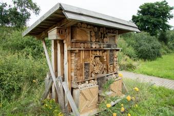 Hotels für Dresdens Bienen und Schmetterlinge