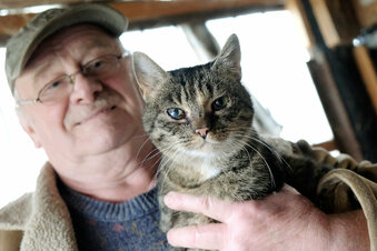 Katzenretter in Not