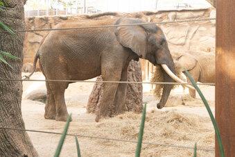 Dresdner Elefant auf dem Weg nach Wien