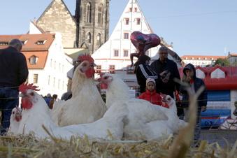 Pirna: Das war das Wochenende