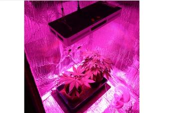 Görlitzer Cannabis-Pärchen kann auf Milde hoffen