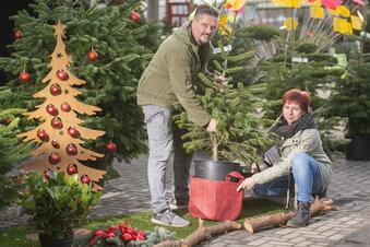 Baumschule vermietet Weihnachtsbäume