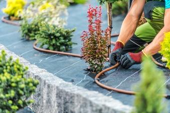 Das brauchen Ihre Pflanzen