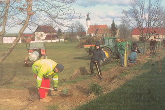 Neue Bäume für Reinersdorfer Sportplatz