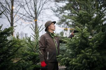 Werden Weihnachtsbäume teurer?