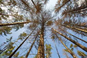 Waldpflege in der Sächsischen Schweiz