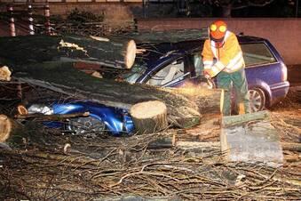 Auto wird von Pappel zerdrückt
