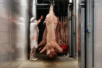 Hickhack um Regeln für Fleischbranche
