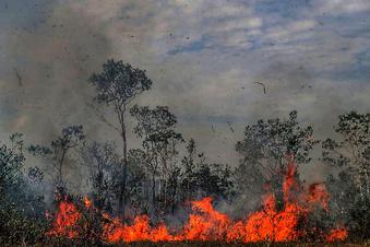 Brasilien verbietet Feuer für 60 Tage
