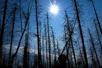 Bischofswerda: Fragen zum Klimawandel