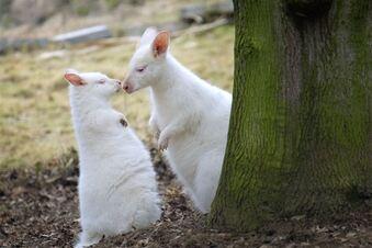 Weiße Liebe
