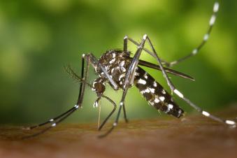 Klimawandel lockt Mücken und Zecken nach Norden