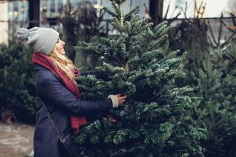 Das sollten Sie beim Baumkauf beachten