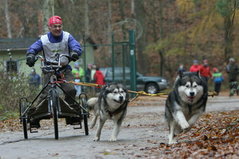 Hunderennen in Oberbärenburg abgesagt