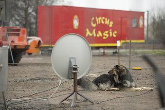 Zirkus in Weinböhla gestrandet