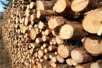 Ein Hektar Wald in Lauta muss fallen