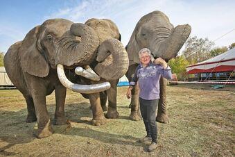 Wirbel um die Zirkus-Elefanten
