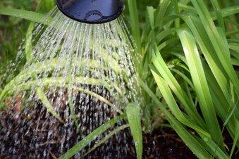 Große Trockenheit: Garten braucht Wasser