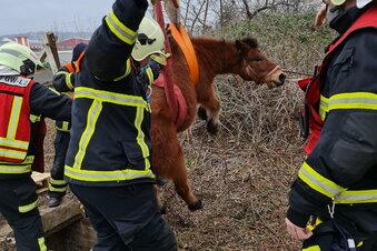 Feuerwehr Radebeul rettet Pony aus Grube